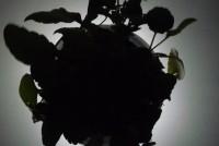 powerplant1c